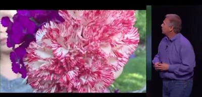 34_41_focus_flower
